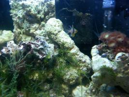 Foto 5 kompl. Meerwasserinhalt oder kompl. Tiere (keine Technik)