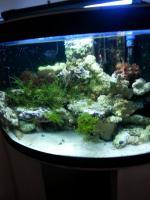 Foto 2 kompletter Beckeninhalt 190l Meerwasser (keine Technik)