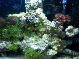 Foto 3 kompletter Beckeninhalt 190l Meerwasser (keine Technik)