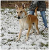 liebevolles zu Hause für blinden Junghund gesucht