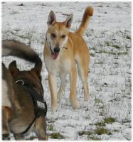 Foto 3 liebevolles zu Hause für blinden Junghund gesucht