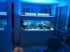 meerwasseraquariumauflösung!!!