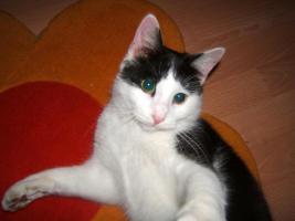 Foto 2 meine katze