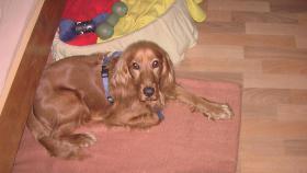 meinen Hund