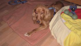 Foto 2 meinen Hund
