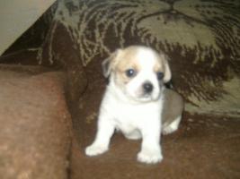 Foto 4 mini teddyb�r