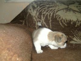 Foto 5 mini teddyb�r