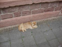 Foto 5 muss leider meine 2 lieben perser katzen abgeben