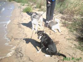 Foto 4 neuer Familienanschluss für 2-jährige Labrador-Mix-Hündin gesucht