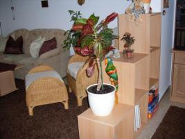 Foto 2 neuwertigen Hochflorteppich und Hochflorläufer