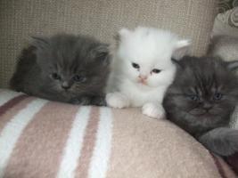 Foto 2 perser babys