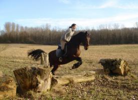 Foto 3 schicke 14-jährige Warmblutstute, 165cm, Freizeitpferd, Dressur
