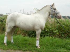 Foto 2 schimmel pony 10 jahre