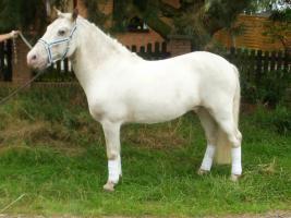 Foto 3 schimmel pony 10 jahre