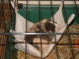 schöne Hängematte zum kuscheln und schlafen für kleine Nagetiere