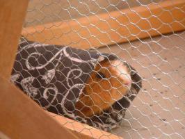 schöne Kuschelrolle zum kuscheln und verstecken für kleine Nagetiere