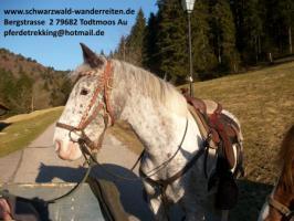 Foto 6 schwarzwald-wanderreiten Todtmoos Au - Reiten für Outdoor-Fans