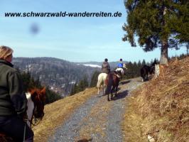 Foto 10 schwarzwald-wanderreiten Todtmoos Au - Reiten für Outdoor-Fans
