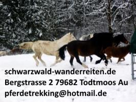 Foto 5 schwarzwald-wanderreiten, Reiten, Reitferien in Todtmoos Au