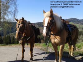 schwarzwald-wanderreiten, Reitferien im Schwarzwald, Reiten nicht nur für Frauen, Todtmoos Au