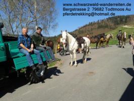 Foto 4 schwarzwald-wanderreiten, Reitferien im Schwarzwald, Reiten nicht nur für Frauen, Todtmoos Au