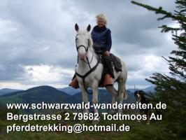 Foto 6 schwarzwald-wanderreiten, Reitferien im Schwarzwald, Reiten nicht nur für Frauen, Todtmoos Au