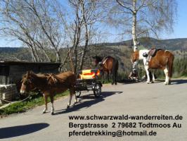 Foto 7 schwarzwald-wanderreiten, Reitferien im Schwarzwald, Reiten nicht nur für Frauen, Todtmoos Au