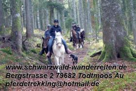 Foto 13 schwarzwald-wanderreiten, Reitferien im Schwarzwald, Reiten nicht nur für Frauen, Todtmoos Au