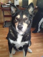 Foto 4 sibirischer husky