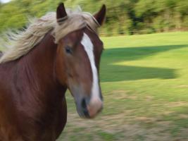 suche mein Pferd