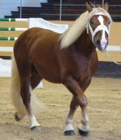 Foto 2 suche mein Pferd