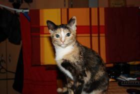 Foto 2 suche neues zuhause für meine katze mit freigang!!!