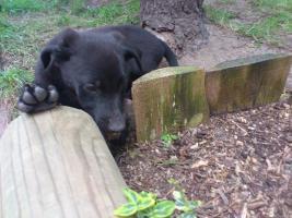 Foto 3 süße Hundewelpen