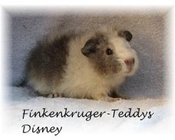 Foto 6 süße Meerschweinchen der Rassen Rex und US-Teddy abzugeben
