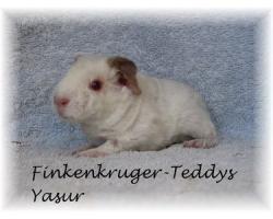 Foto 11 süße Meerschweinchen der Rassen Rex und US-Teddy abzugeben
