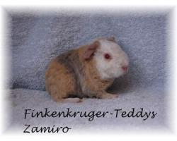 Foto 12 süße Meerschweinchen der Rassen Rex und US-Teddy abzugeben