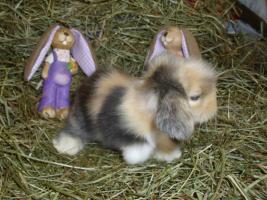 süße Teddywidder Babys