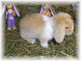 Foto 2 süße Teddywidder Babys