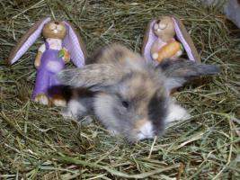 Foto 4 süße Teddywidder Babys