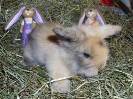Foto 6 süße Teddywidder Babys