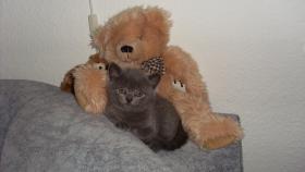 Foto 3 süsse kitten suchen zu hause!!