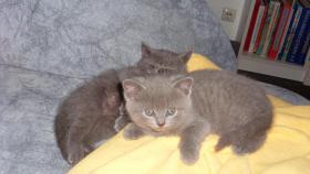 Foto 5 süsse kitten suchen zu hause!!