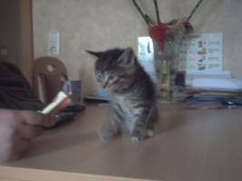 Foto 2 süße kleine katzenbabys