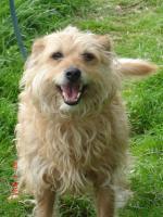 Foto 2 süße, kleine, liebe Terriermixhündin sucht endlich Zuhause für immer!
