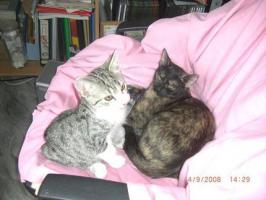 süßes Katzenpaar , sucht liebevolles zuhause
