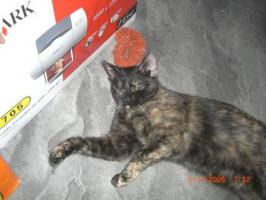 Foto 2 süßes Katzenpaar , sucht liebevolles zuhause