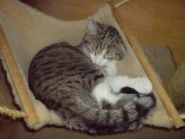Foto 5 süßes Katzenpaar , sucht liebevolles zuhause