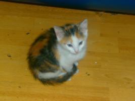 süßes katzenbaby ca 8 wochen in liebevolle hände abzugeben