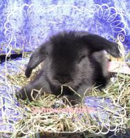 Foto 3 süüüße Teddywidder Babys  HT