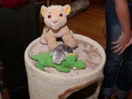 Foto 3 super verschmuste Perserbabys suchen neues Zuhause